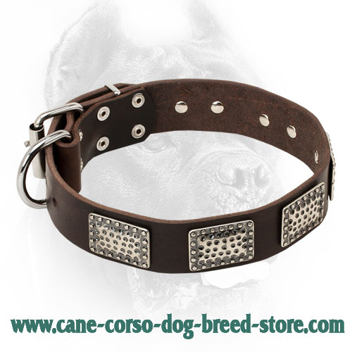 Vintage Leather Cane Corso Collar with Studs and Dotted Plates