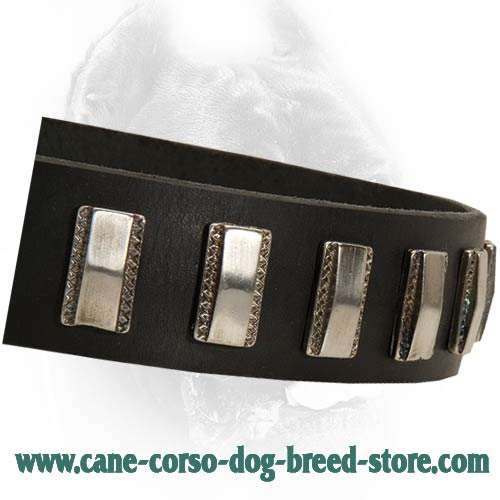 Elegant Leather Cane Corso Collar with Small Plates