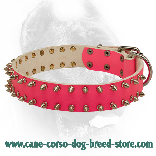 Glamour Pink Leather Cane Corso Collar with 2 Rows of Spikes