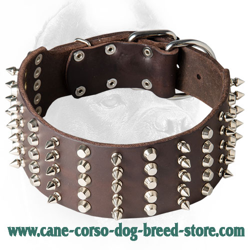 3 Inch Leather Cane Corso Collar with Spikes and Studs