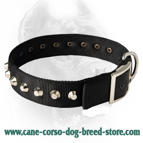 Gorgeous Nylon Dog Collar With Nickel Pyramids