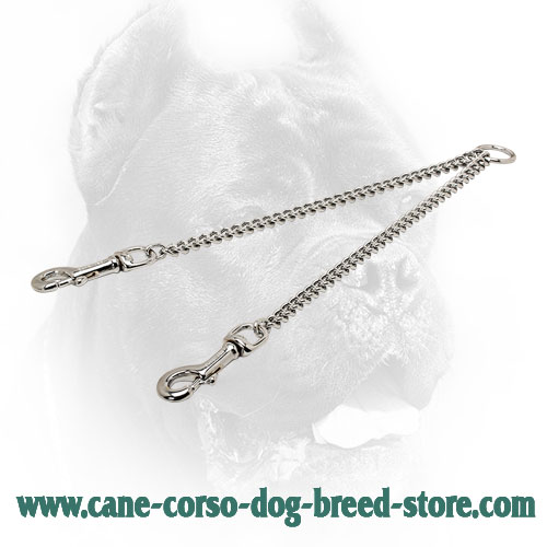 Chrome Plated Cane Corso Coupler for Walking Two Dogs