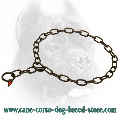 Black Stainless Steel Cane Corso Dog Collar with Fur Saving Links