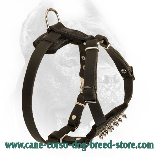 Puppy Spiked Design Leather Cane Corso Harness