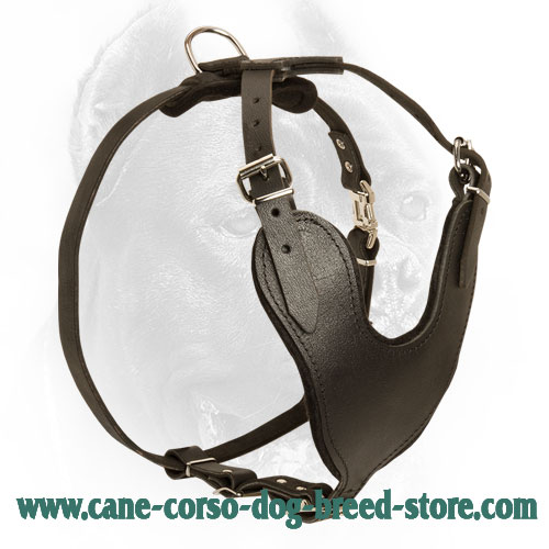 Multifunctional Leather Cane Corso Harness for Daily Use