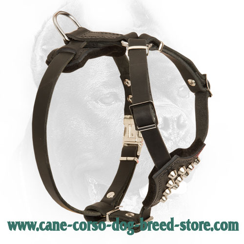 Small Leather Cane Corso Harness with Pyramids
