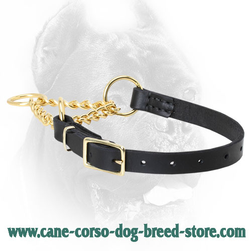 Leather Cane Corso Martingale Collar with Buckle and Brass Chain