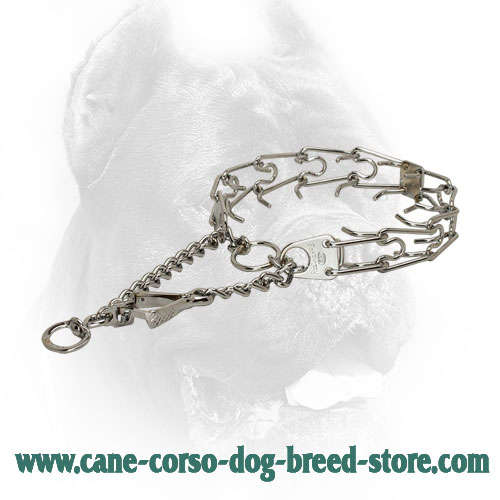 Extra Strong Chrome Plated Cane Corso Pinch Collar with Swivel
