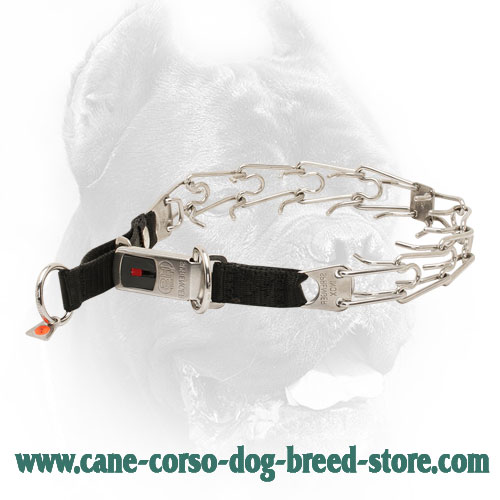 Stainless Steel Cane Corso Pinch Collar with Click Lock System and Nylon Loop