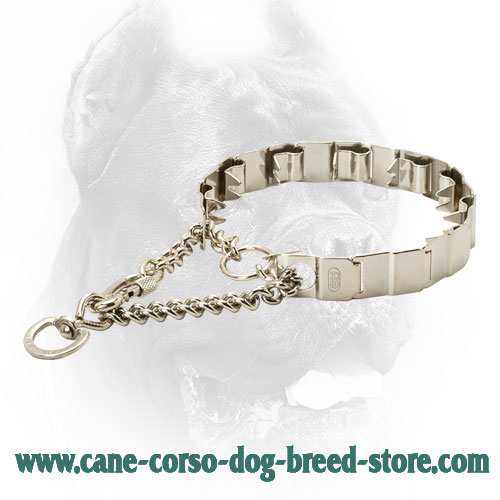 19 Inch HS Stainless Steel Cane Corso Prong Collar