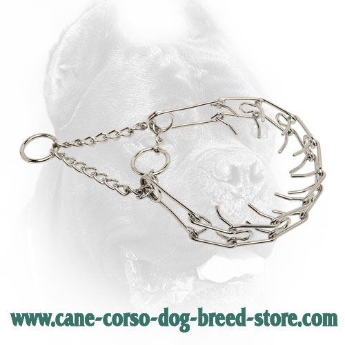 Chrome Plated Cane Corso Pinch Collar with 2.3 mm Prongs