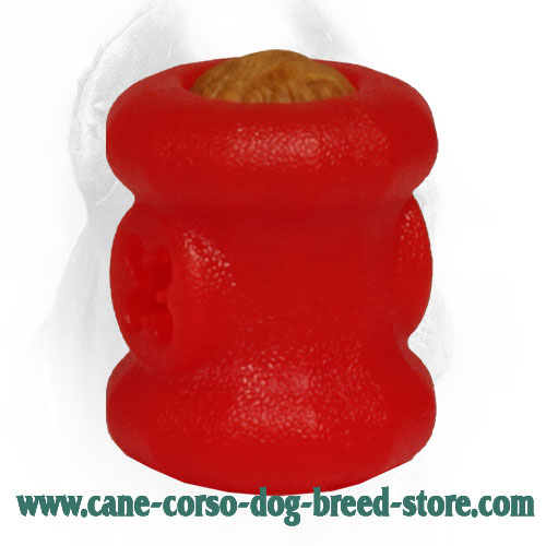 Small Cane Corso Fire Plug with Everlasting Treats Inside