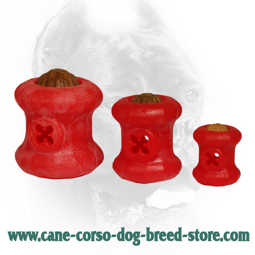 Large Everlasting Cane Corso Fire Plug