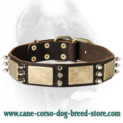 Gorgeous Custom Leather Spiked Collar - Handcrafted Cane Corso Collar