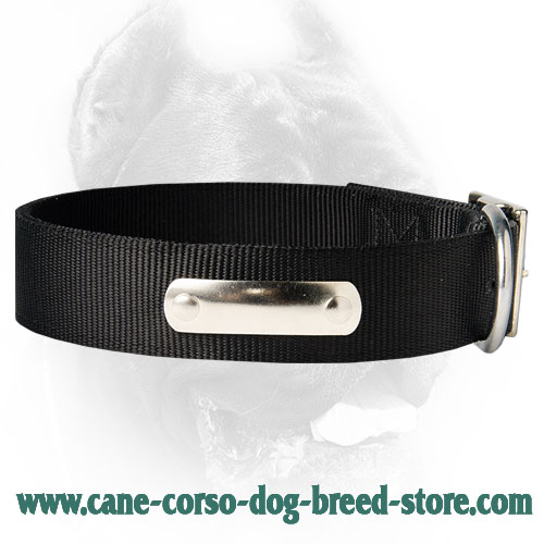 Strongest 2 Ply Nylon Dog Collar w/h name tag/Metal Buckle