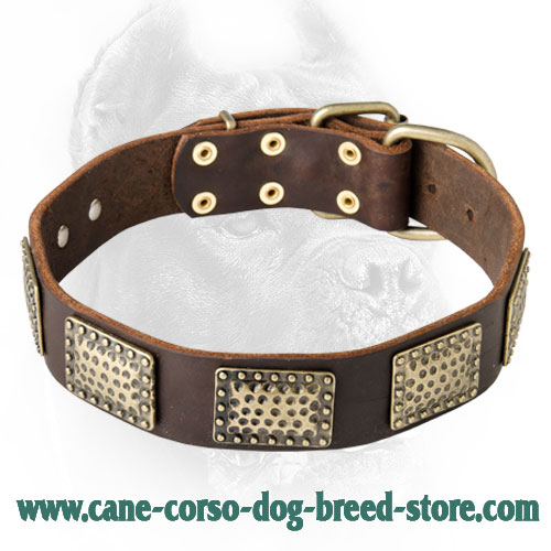 Fashionable Leather Dog Collar with Vintage Plates for Cane Corso