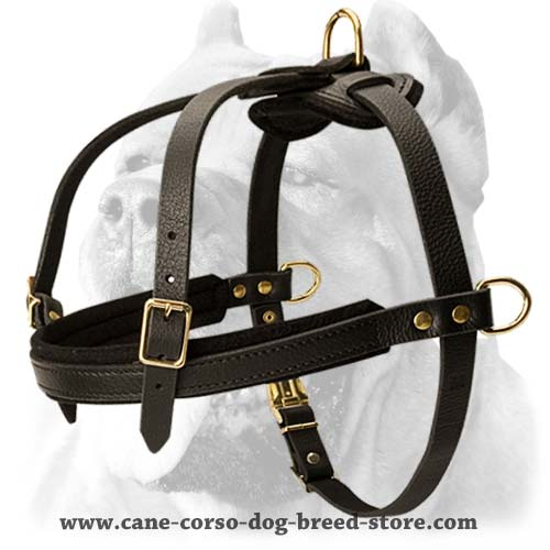 Tracking/Pulling/Agitation Leather Dog Harness For Cane Corso