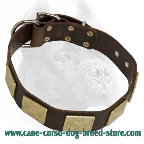 Outstanding Leather Dog Collar With Massive Handmade Brass Plates