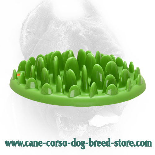 Big Canine Feeder for Slow Healthier Eating