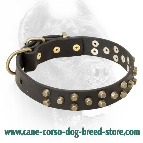Skillfully Studded Leather Cane Corso Collar for Walking