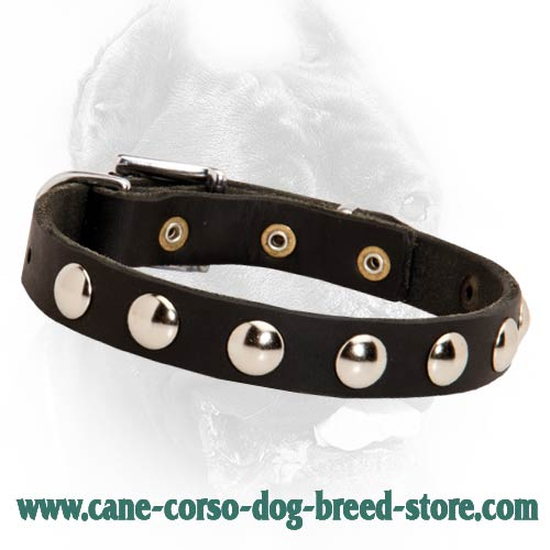 Delicate Leather Dog Collar with Half Ball Nickel-Plated Studs