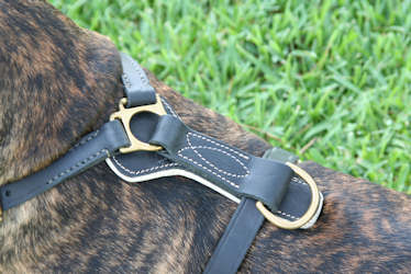 Royal Design Studded Leather Cane Corso Harness