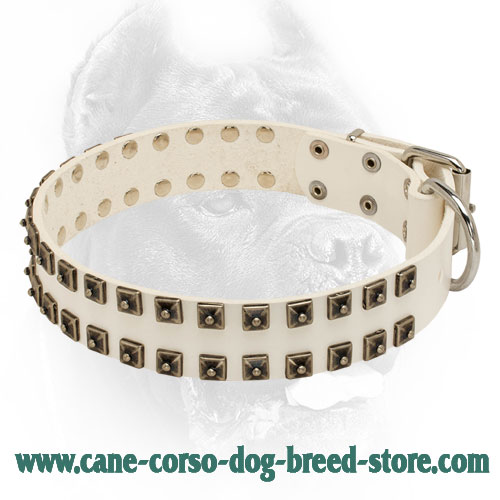 Elegant Wihte Leather Dog Collar with 2 Rows of Studs