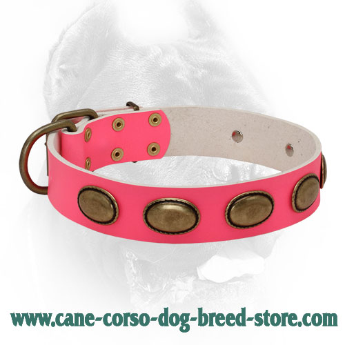Pink Leather Dog Collar with Vintage Brass Oval Plates