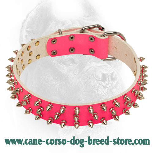 Spiked Pink Leather Cane Corso Collar with 3 Rows of Spikes