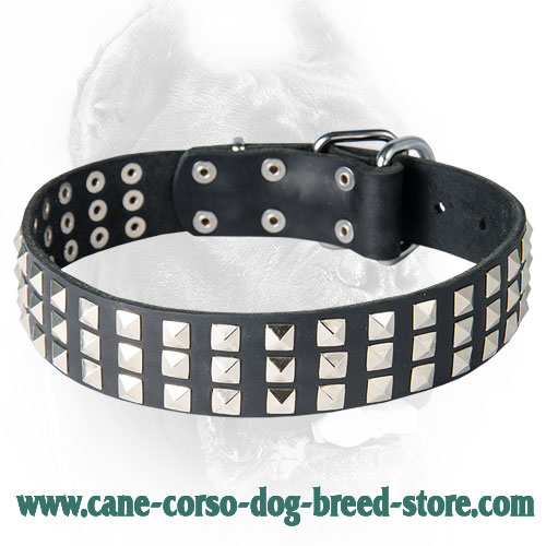 Silver Pyramid Studded Leather Dog Collar for Cane Corso