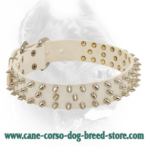 Perfect Design White Leather Cane Corso Collar with Vintage Spikes