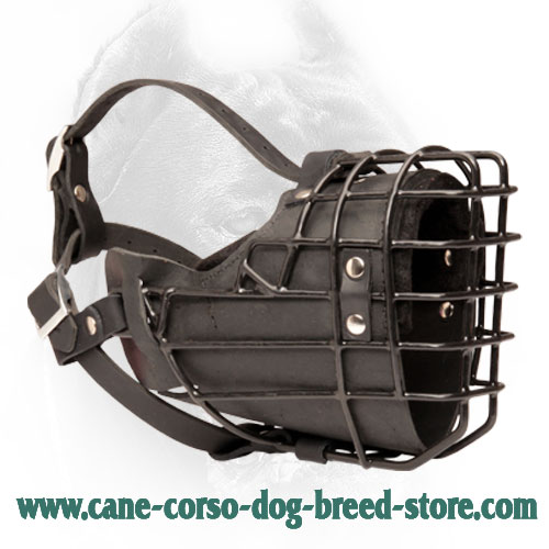 Rubber Covered Metal Basket Cane Corso Muzzle for Winter Activities