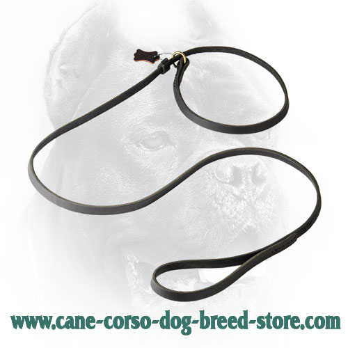 Leather Cane Corso Leash and Choke Collar Combo for Universal Use