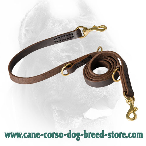 Multipurpose Cane Corso Leash Leather Perfecly Oiled