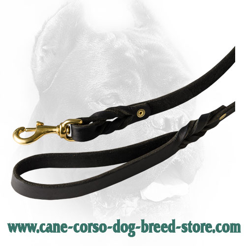 Elegant Braids on Durable Cane Corso Leash