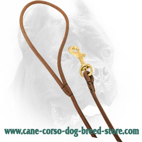 Durable Handle on Cane Corso Leash