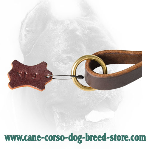 Solid Brass O-Ring on Cane Corso Leash