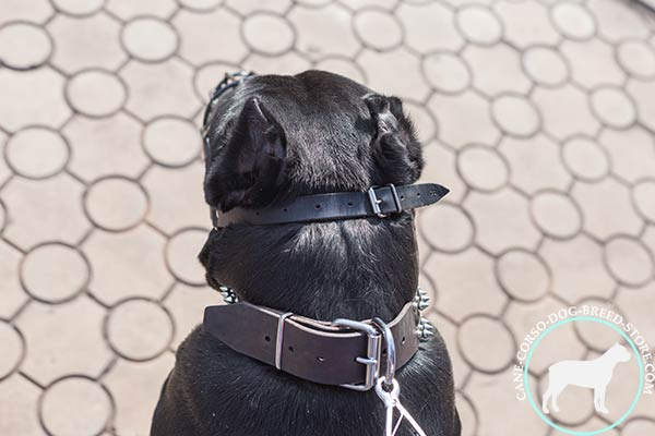 Easy adjustable Cane Corso wire muzzle