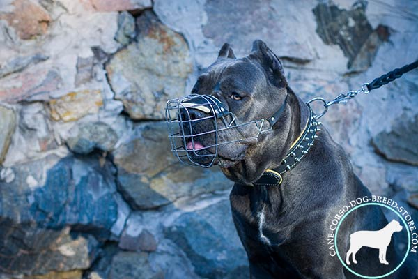 Well-ventilated Cane Corso muzzle