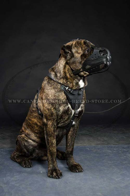 Safe Leather Dog Muzzle For Attack/Agitation Training