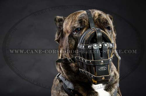 Best Cage Leather Dog Muzzle For Cane Corsos