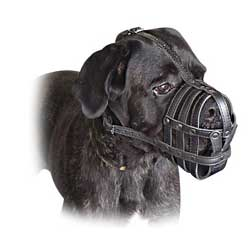 Handmade high quality muzzle for Italian Mastiff
