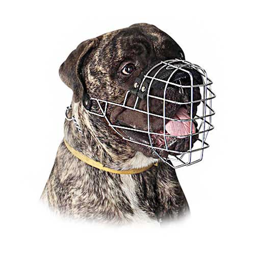 Easy To Use Wire Basket Cane Corso Muzzle With One Strap
