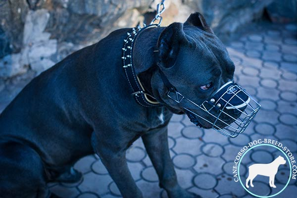 Cane Corso wire basket muzzle with rustless nickel plated hardware for any activity