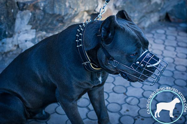Cane Corso wire basket muzzle of high quality with nickel plated hardware for walking