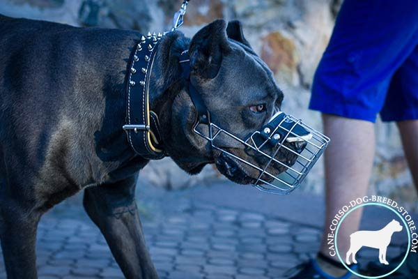 Cane Corso wire basket muzzle well ventilated with traditional buckle for utmost comfort