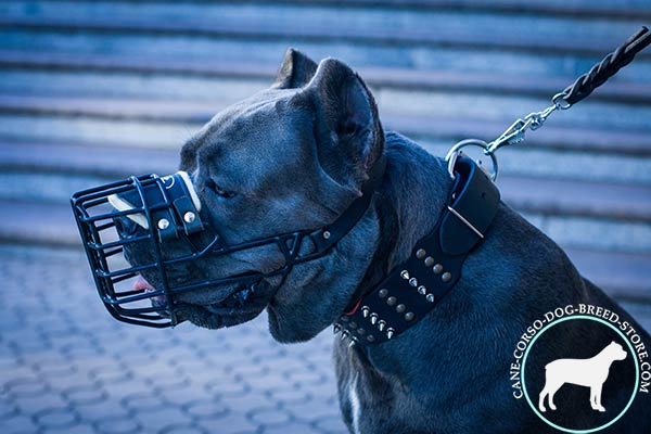 Cane Corso wire cage muzzle adjustable  with traditional buckle for advanced training