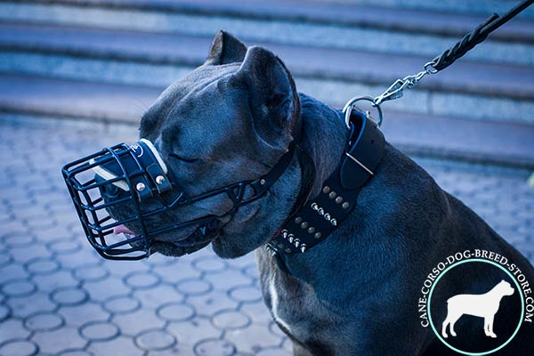 Cane Corso wire cage muzzle with rustless hardware for any activity