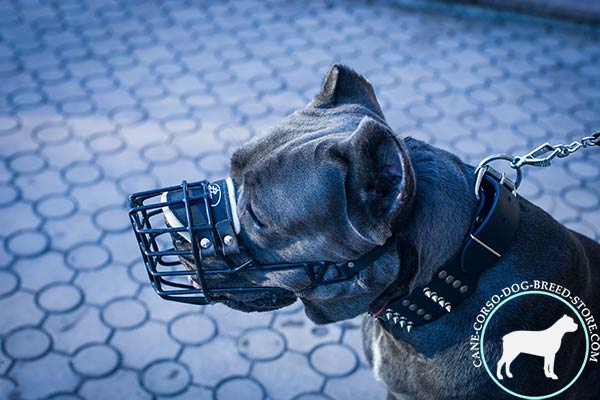 Cane Corso wire cage muzzle adjustable  with traditional buckle for walking in style
