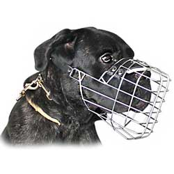 Well-made everyday Cane Corso muzzle
